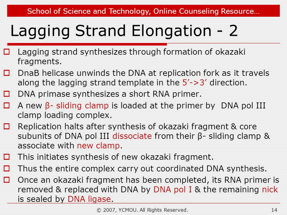 School of Science and Technology, Online Counseling Resource… Lagging Strand Elongation - 2  Lagging strand synthesizes through formation of okazaki