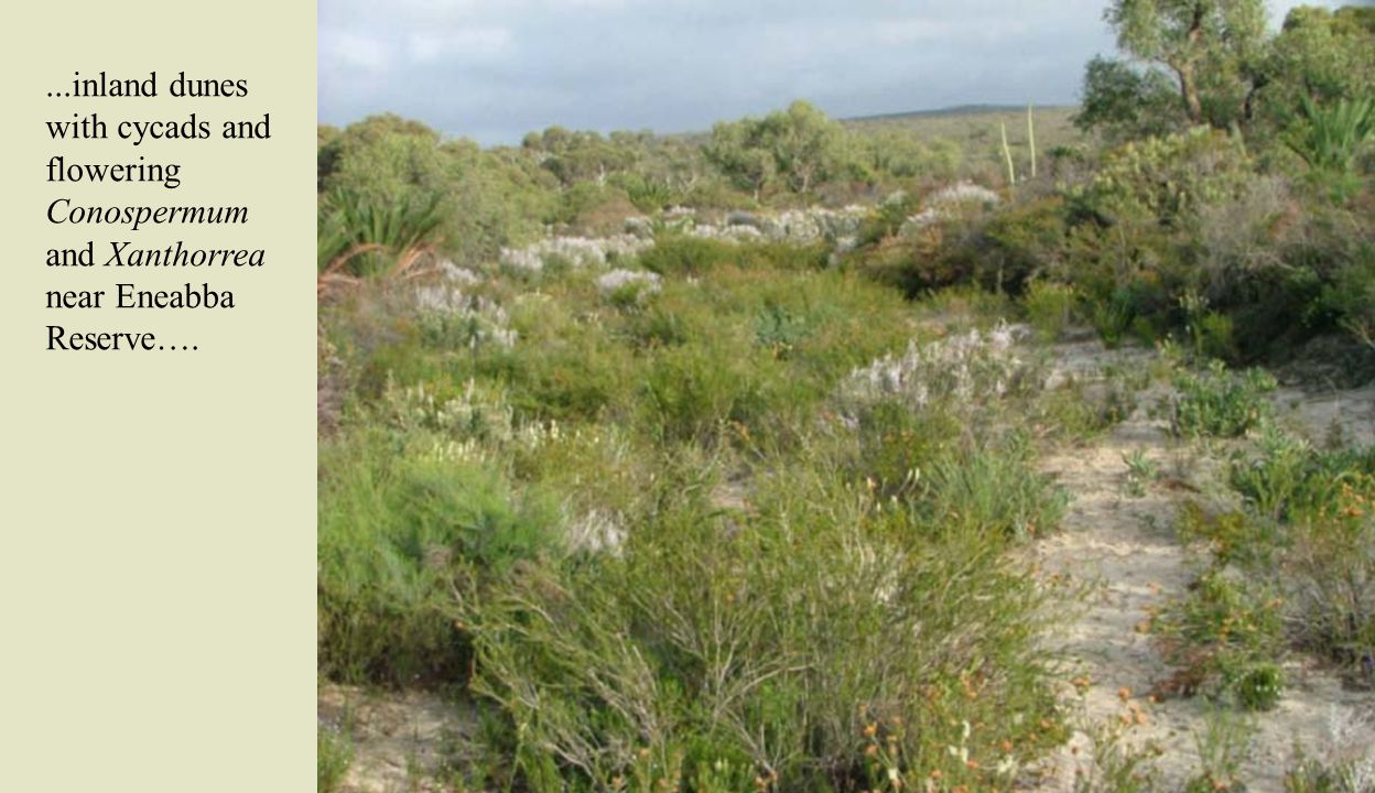 …heath vegetation as in Lesuer National Park (left) and roadside collecting spots with Acacia as the one north of Carnarvon (right).