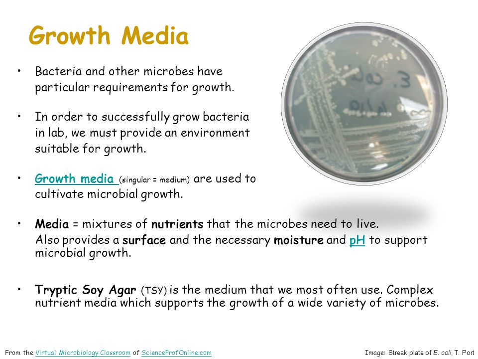 Growth Media Bacteria and other microbes have particular requirements for growth.