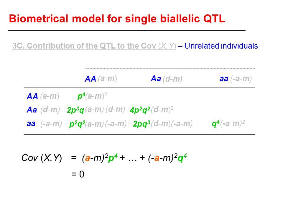 Biometrical model for single biallelic QTL AA Aa aa AA Aaaa (a-m)(a-m) (d-m)(d-m) (-a-m) (a-m)(a-m) (d-m)(d-m) (a-m)2(a-m)2 (a-m)(a-m) (d-m)(d-m) (a-m)(a-m) (d-m)2(d-m)2 (d-m)(d-m) (-a-m) 2 p4p4 2p 3 q p2q2p2q2 4p 2 q 2 2pq 3 q4q4 = (a-m) 2 p 4 + … + (-a-m) 2 q 4 Cov (X,Y) = 0 3C.