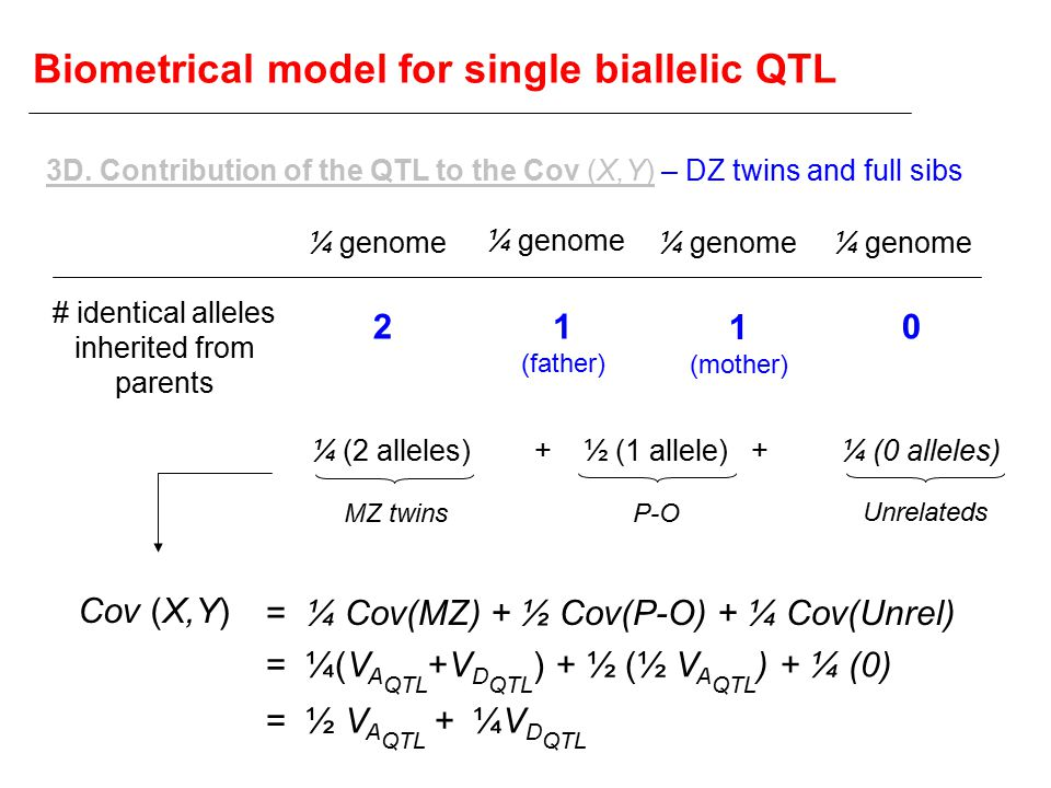 Biometrical model for single biallelic QTL Cov (X,Y) 3D.