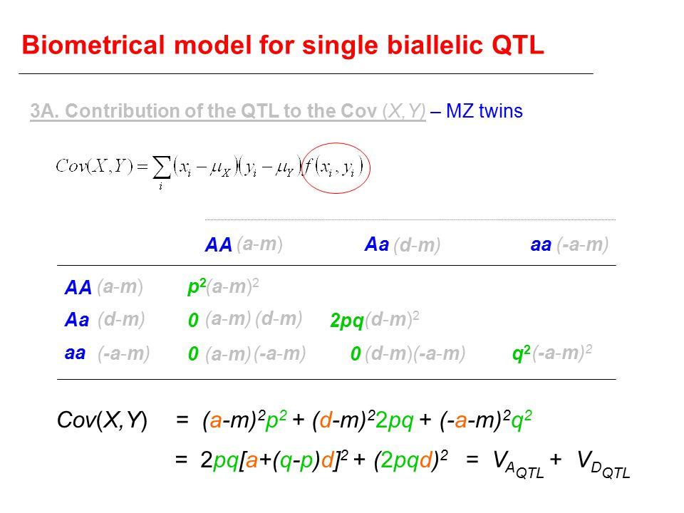 Biometrical model for single biallelic QTL AA Aa aa AA Aaaa (a-m)(a-m) (d-m)(d-m) (-a-m) (a-m)(a-m) (d-m)(d-m) (a-m)2(a-m)2 (a-m)(a-m) (d-m)(d-m) (a-m)(a-m) (d-m)2(d-m)2 (d-m)(d-m) (-a-m) 2 p2p2 0 0 2pq 0 q2q2 3A.