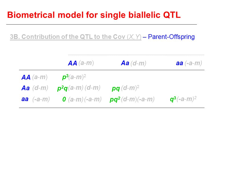 Biometrical model for single biallelic QTL AA Aa aa AA Aaaa (a-m)(a-m) (d-m)(d-m) (-a-m) (a-m)(a-m) (d-m)(d-m) (a-m)2(a-m)2 (a-m)(a-m) (d-m)(d-m) (a-m)(a-m) (d-m)2(d-m)2 (d-m)(d-m) (-a-m) 2 p3p3 p2qp2q 0 pq pq 2 q3q3 3B.