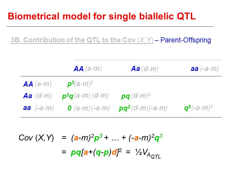 Biometrical model for single biallelic QTL AA Aa aa AA Aaaa (a-m)(a-m) (d-m)(d-m) (-a-m) (a-m)(a-m) (d-m)(d-m) (a-m)2(a-m)2 (a-m)(a-m) (d-m)(d-m) (a-m)(a-m) (d-m)2(d-m)2 (d-m)(d-m) (-a-m) 2 p3p3 p2qp2q 0 pq pq 2 q3q3 = (a-m) 2 p 3 + … + (-a-m) 2 q 3 Cov (X,Y) = ½V A QTL = pq[a+(q-p)d] 2 3B.