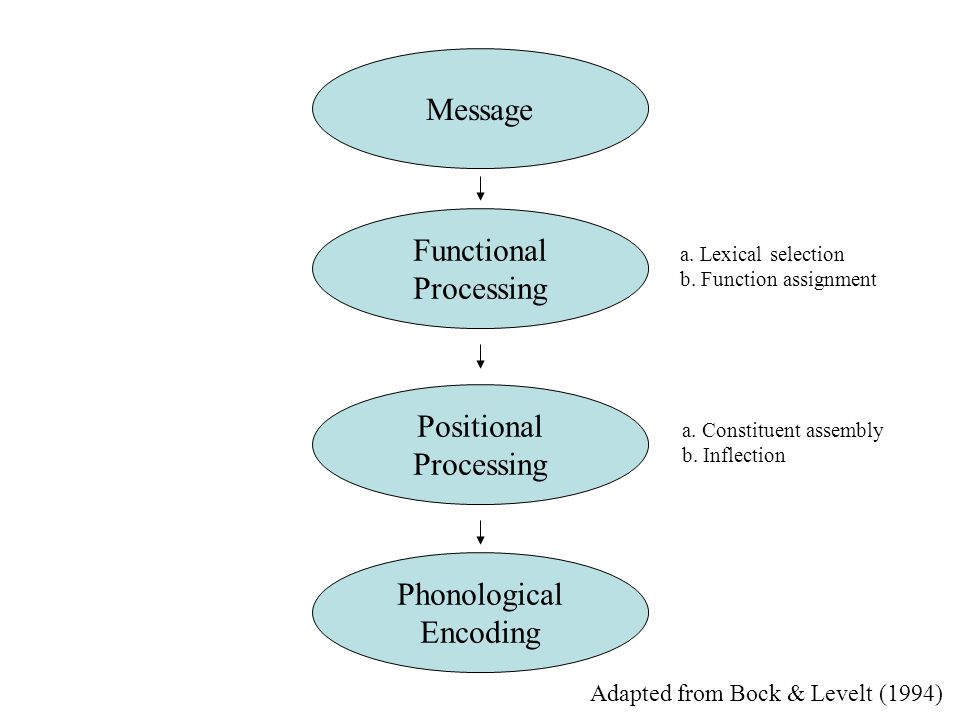 Message Functional Processing Positional Processing Phonological Encoding a.