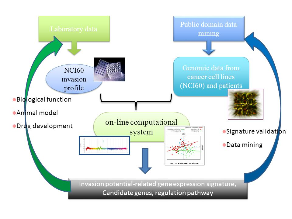 NCI-60 cell line based integrative computational system for tumor invasion- related genes 許藝瓊博士 中研院統計所 syic@stat.sinica.edu.tw