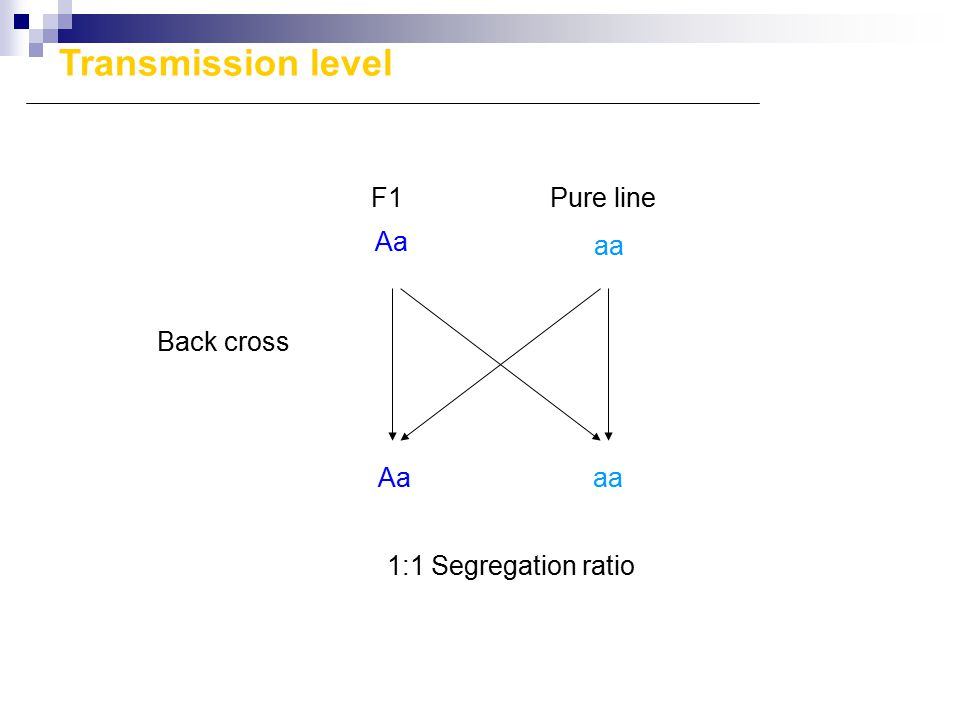 Aa aa Aaaa F1Pure line Back cross 1:1 Segregation ratio Transmission level