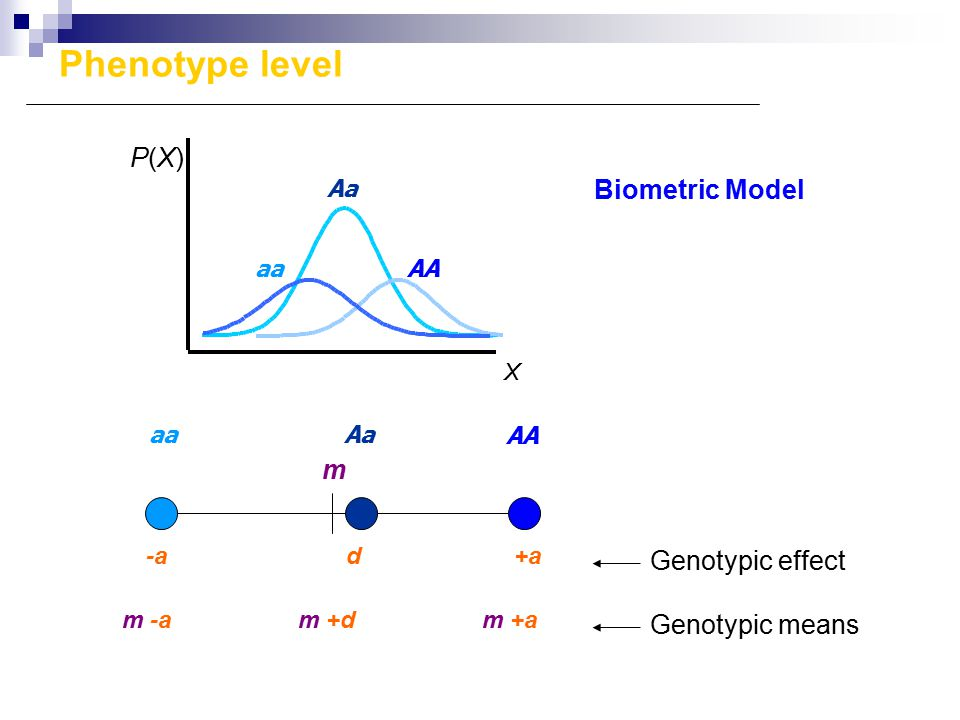 m d+a P(X)P(X) X AA Aa aa -a AA Aaaa Genotypic means Biometric Model Genotypic effect Phenotype level m -am +dm +a