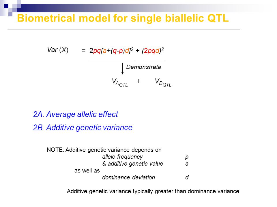 Var (X) = 2pq[a+(q-p)d] 2 + (2pqd) 2 V A QTL + V D QTL Demonstrate 2A. Average allelic effect 2B. Additive genetic variance NOTE: Additive genetic var