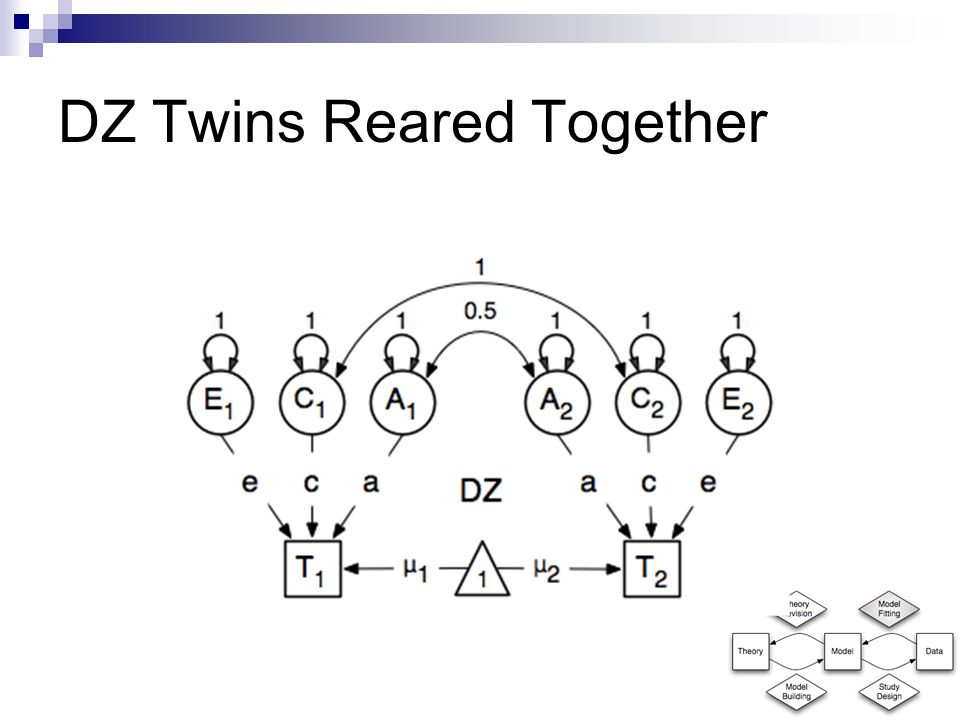 DZ Twins Reared Together