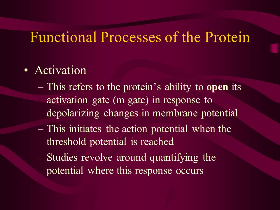 Functional Processes of the Protein Activation –This refers to the protein's ability to open its activation gate (m gate) in response to depolarizing