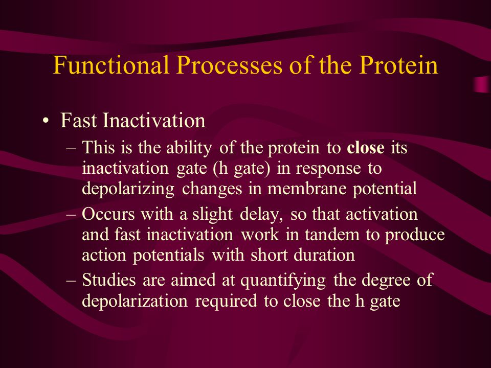 Functional Processes of the Protein Fast Inactivation –This is the ability of the protein to close its inactivation gate (h gate) in response to depol