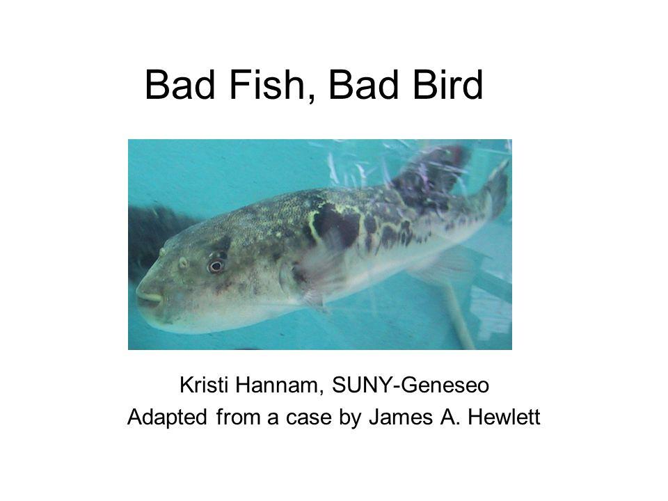 Bad Fish, Bad Bird Kristi Hannam, SUNY-Geneseo Adapted from a case by James A. Hewlett