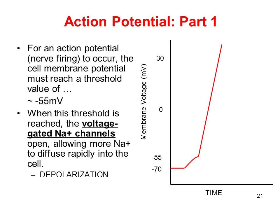 21 Action Potential: Part 1 For an action potential (nerve firing) to occur, the cell membrane potential must reach a threshold value of … ~ -55mV When this threshold is reached, the voltage- gated Na+ channels open, allowing more Na+ to diffuse rapidly into the cell.