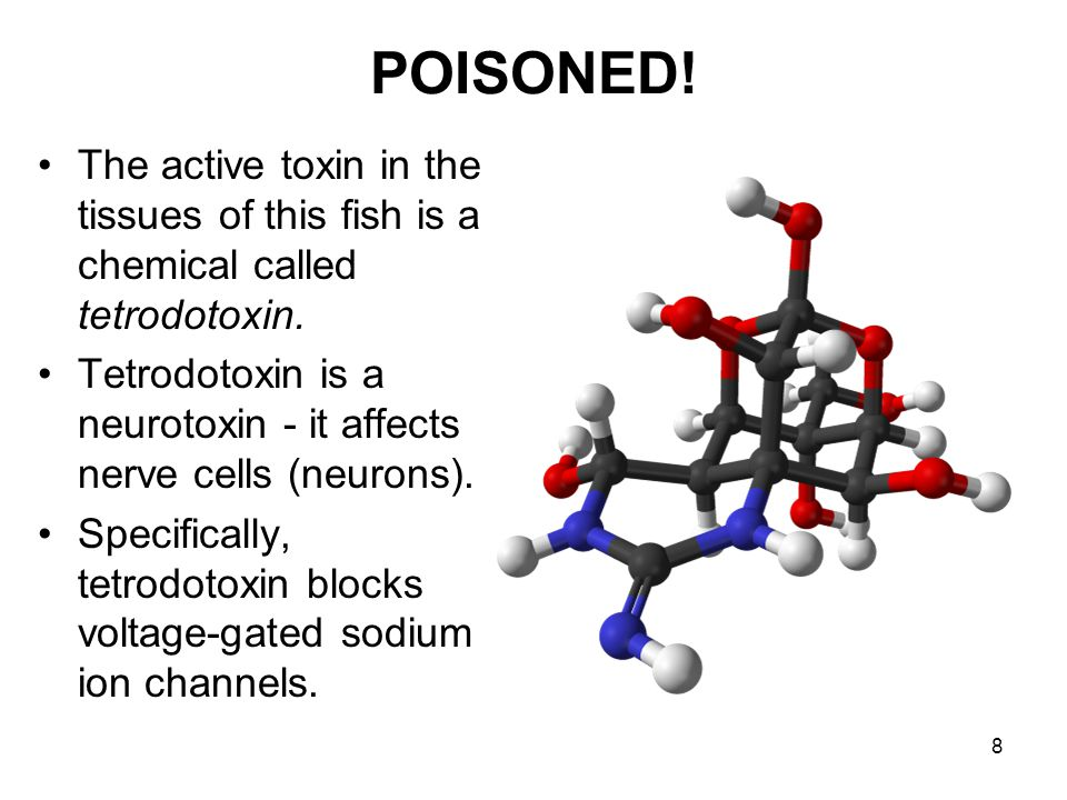 8 POISONED.The active toxin in the tissues of this fish is a chemical called tetrodotoxin.