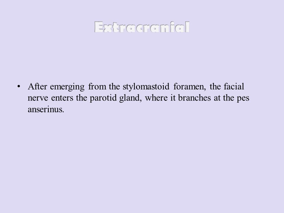 After emerging from the stylomastoid foramen, the facial nerve enters the parotid gland, where it branches at the pes anserinus.