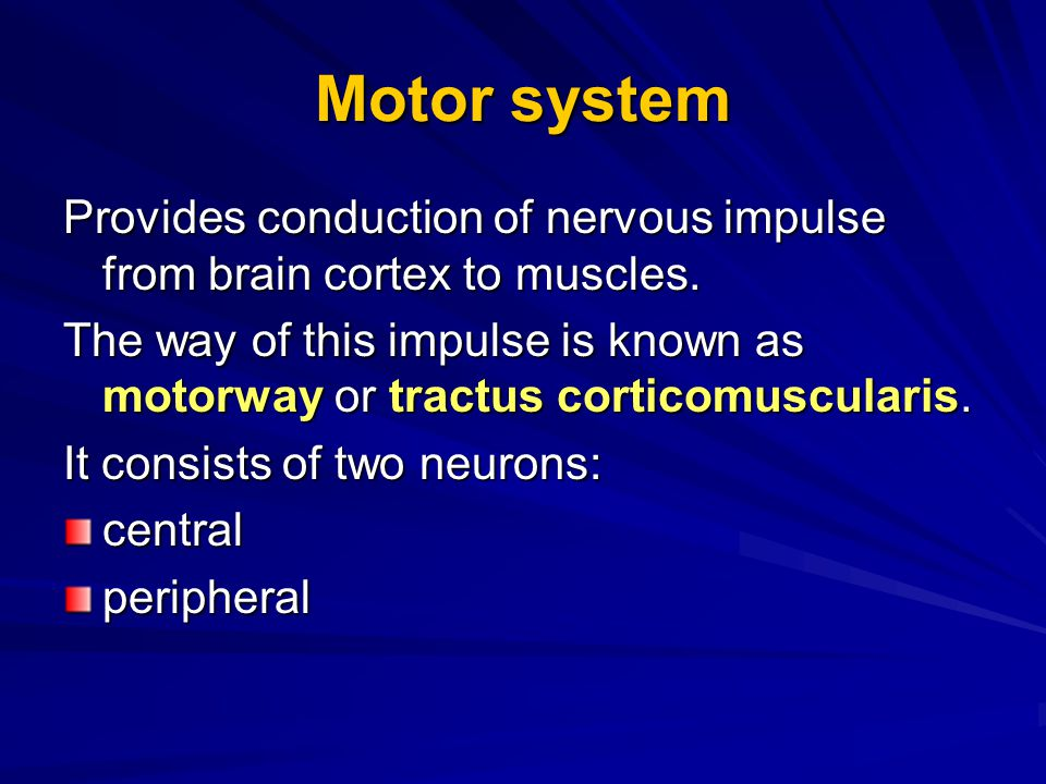 Motor system Provides conduction of nervous impulse from brain cortex to muscles.