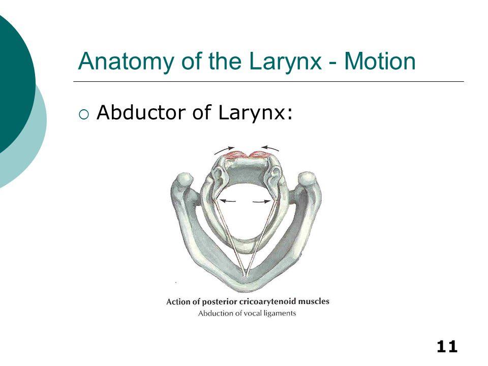 11 Anatomy of the Larynx - Motion  Abductor of Larynx: