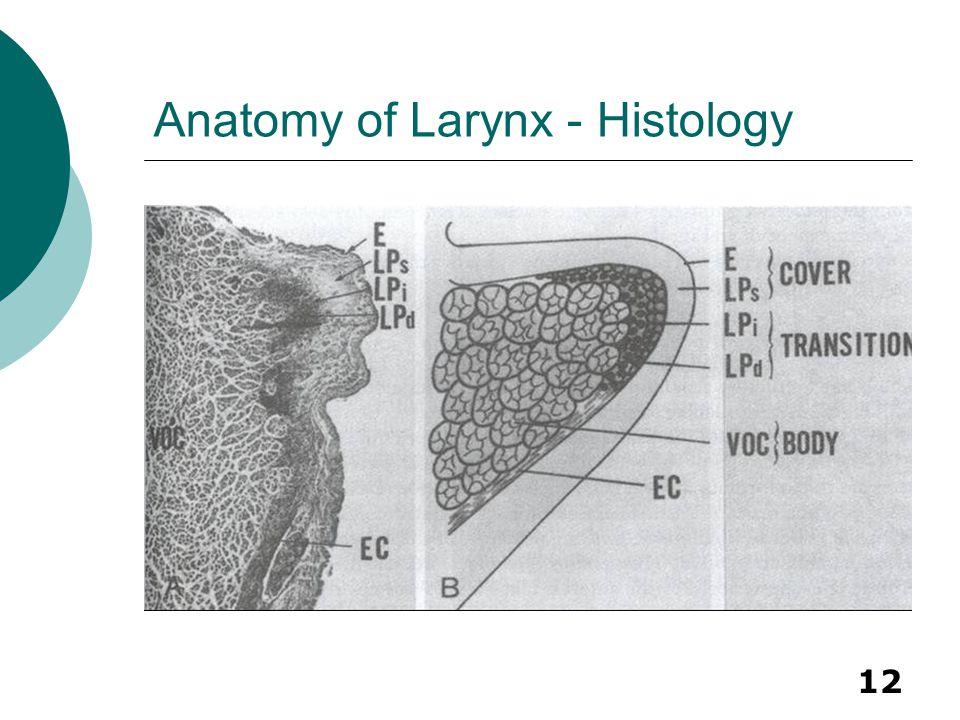 12 Anatomy of Larynx - Histology