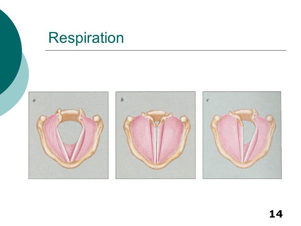14 Respiration