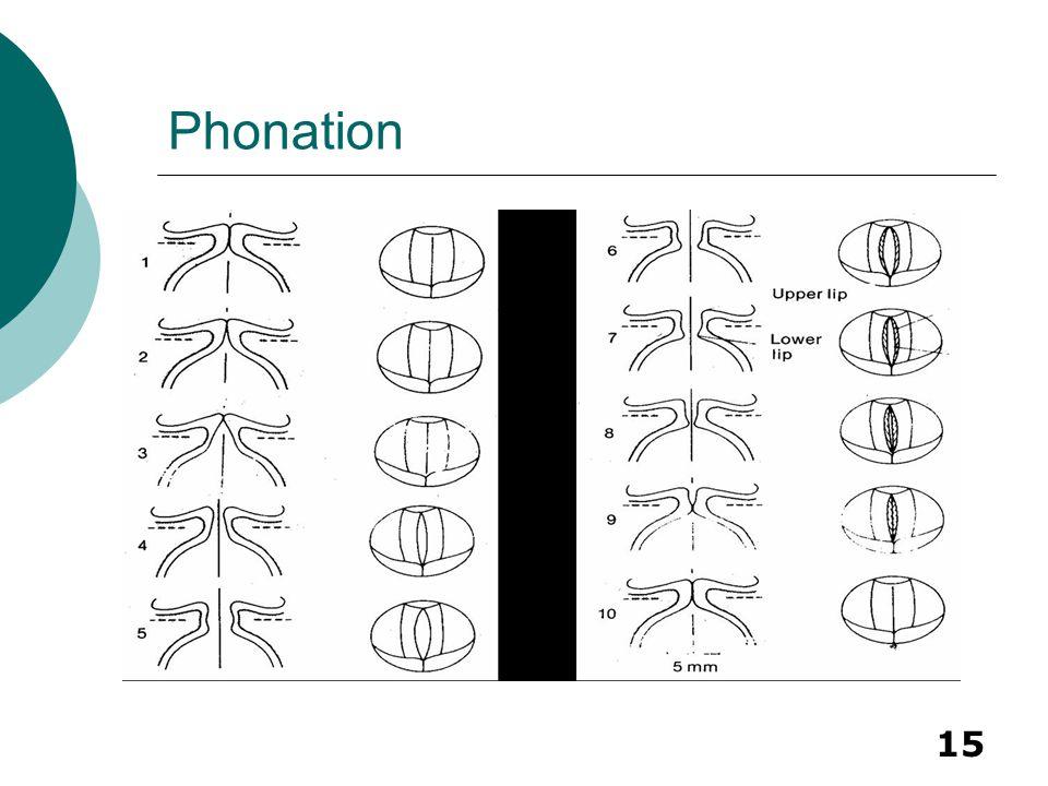 15 Phonation