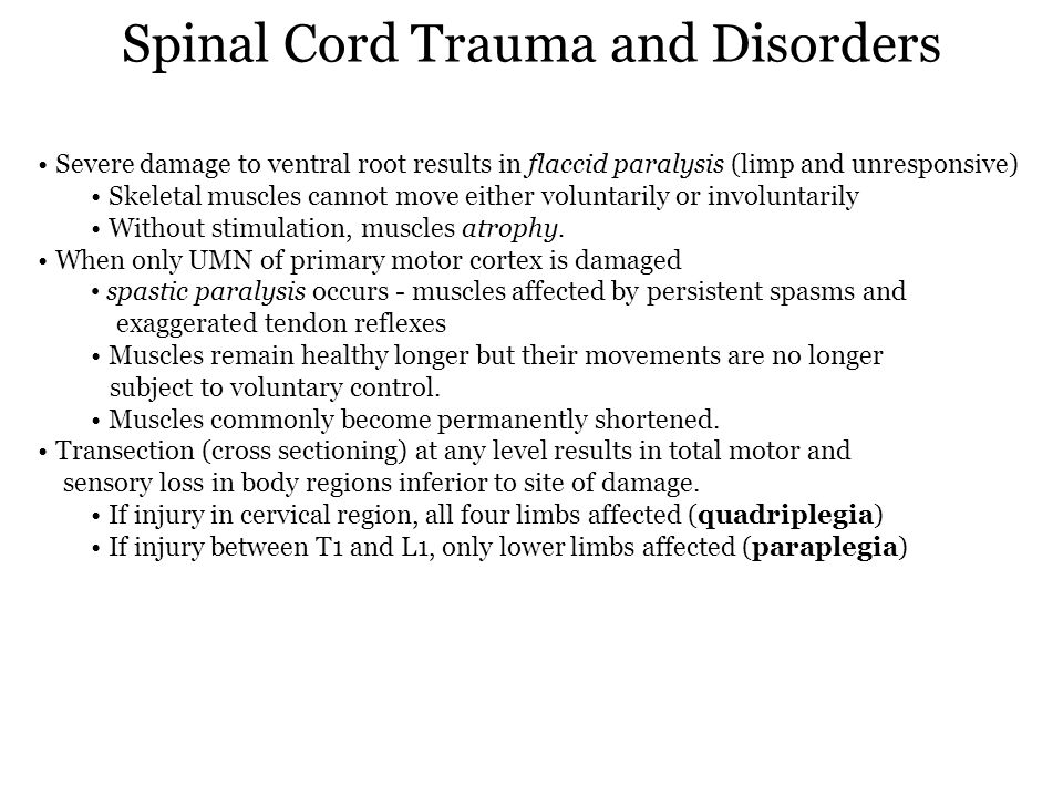 Spinal Cord Trauma and Disorders Severe damage to ventral root results in flaccid paralysis (limp and unresponsive) Skeletal muscles cannot move eithe
