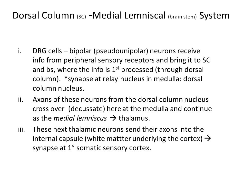 Dorsal Column (SC) - Medial Lemniscal (brain stem) System i.DRG cells – bipolar (pseudounipolar) neurons receive info from peripheral sensory receptors and bring it to SC and bs, where the info is 1 st processed (through dorsal column).