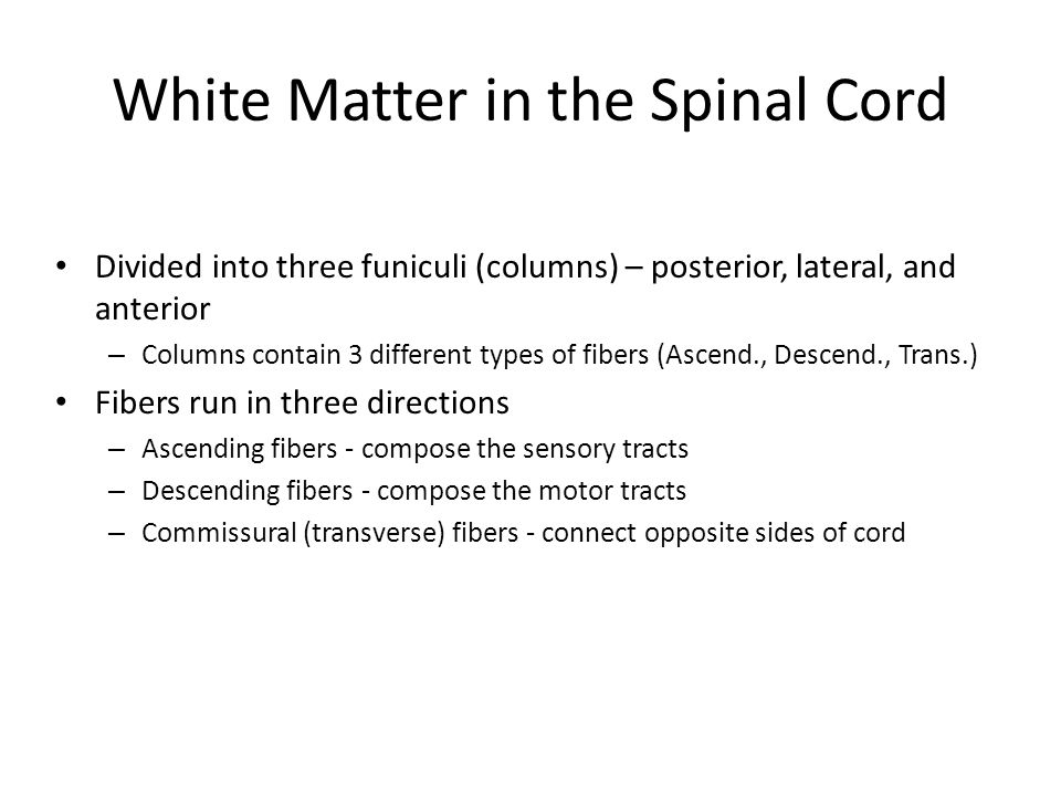 White Matter in the Spinal Cord Divided into three funiculi (columns) – posterior, lateral, and anterior – Columns contain 3 different types of fibers