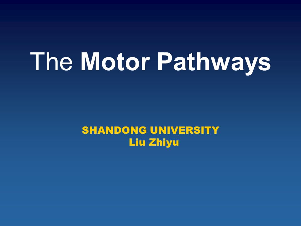 The Motor Pathways SHANDONG UNIVERSITY Liu Zhiyu