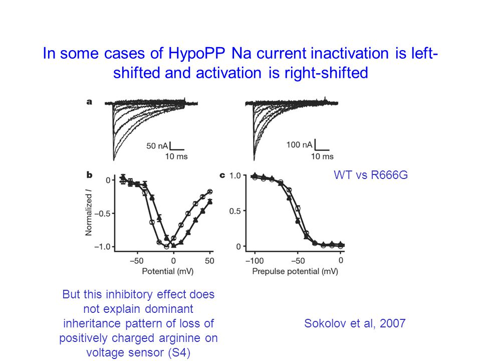 In some cases of HypoPP Na current inactivation is left- shifted and activation is right-shifted Sokolov et al, 2007 But this inhibitory effect does not explain dominant inheritance pattern of loss of positively charged arginine on voltage sensor (S4) WT vs R666G