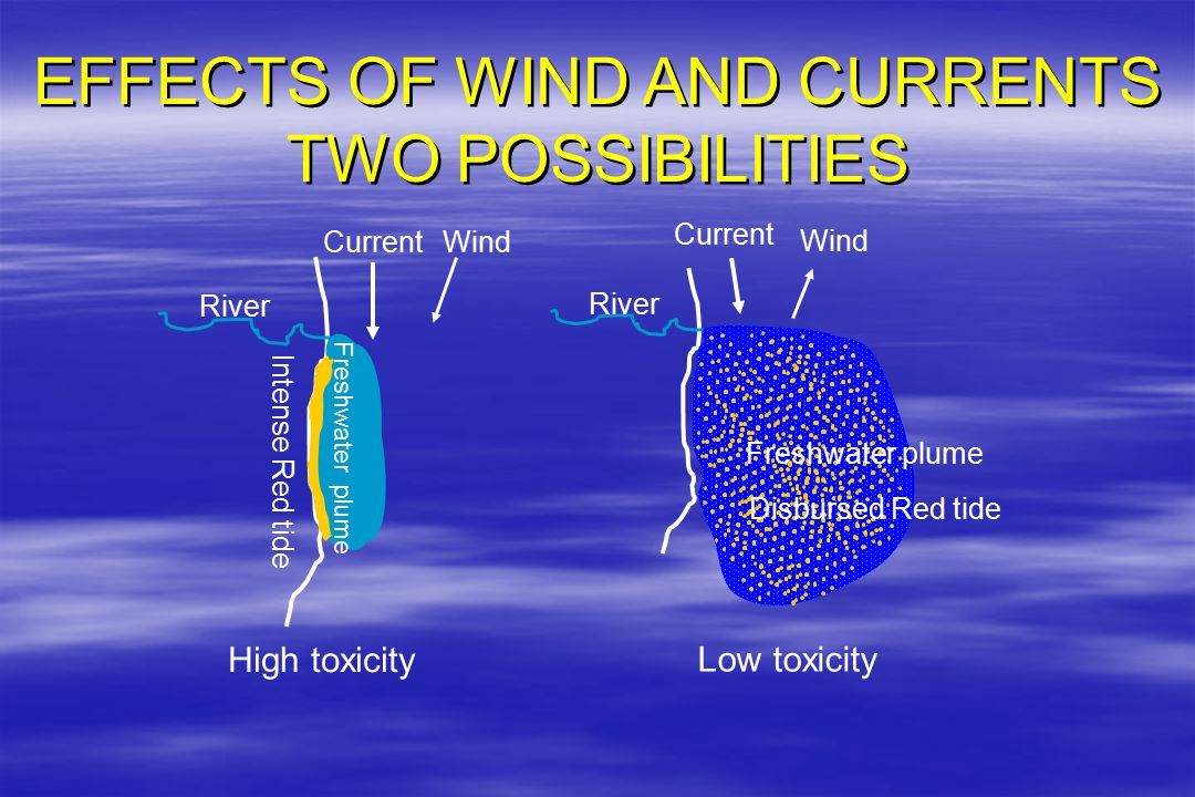 EFFECTS OF WIND AND CURRENTS TWO POSSIBILITIES EFFECTS OF WIND AND CURRENTS TWO POSSIBILITIES Wind River Current Freshwater plume Intense Red tide High toxicity