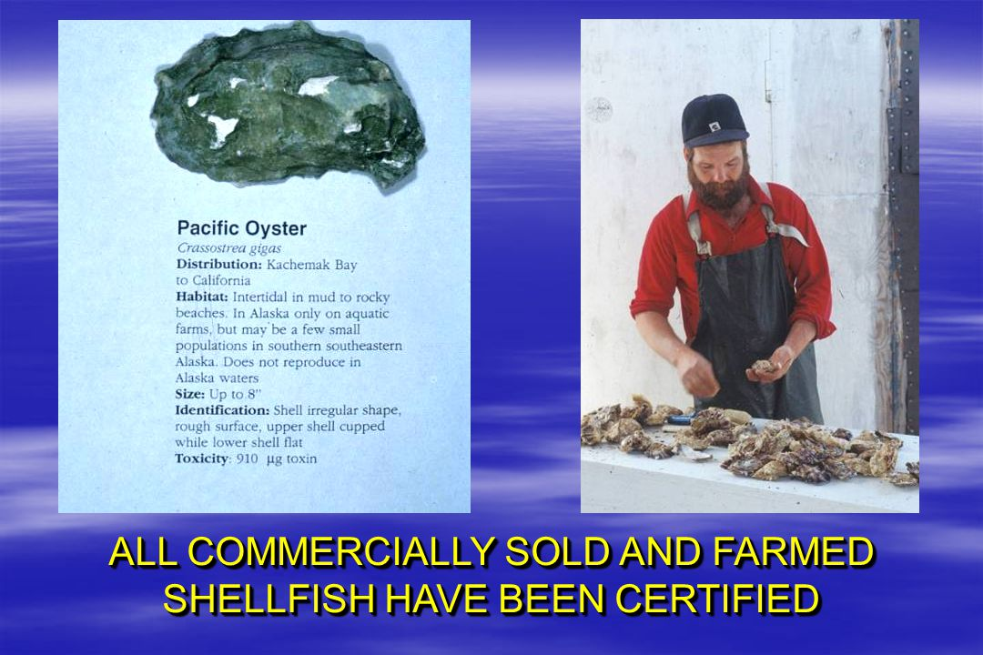 ALL COMMERCIALLY SOLD AND FARMED SHELLFISH HAVE BEEN CERTIFIED