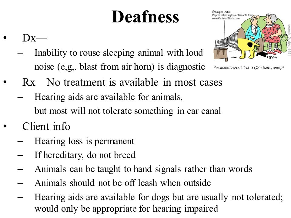 Deafness Dx— – Inability to rouse sleeping animal with loud noise (e,g,.