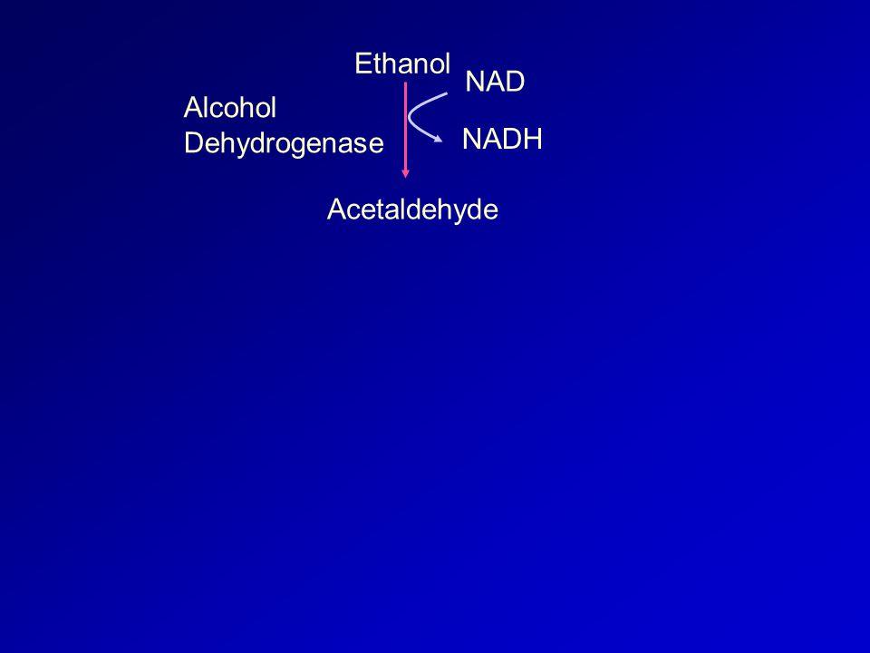 Ethanol Acetaldehyde NAD NADH Alcohol Dehydrogenase