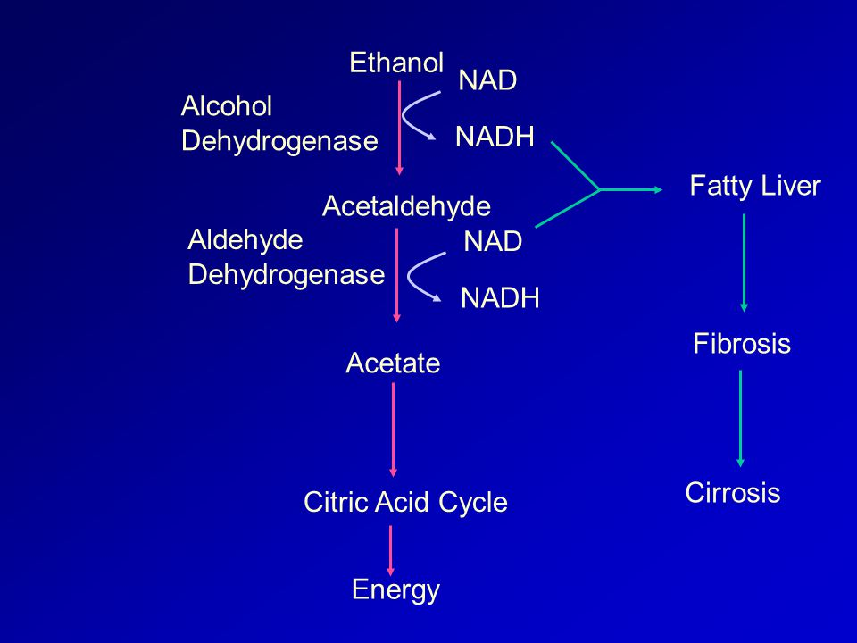Ethanol Acetaldehyde Acetate Citric Acid Cycle NAD NADH NAD NADH Alcohol Dehydrogenase Aldehyde Dehydrogenase Energy Fatty Liver Fibrosis Cirrosis