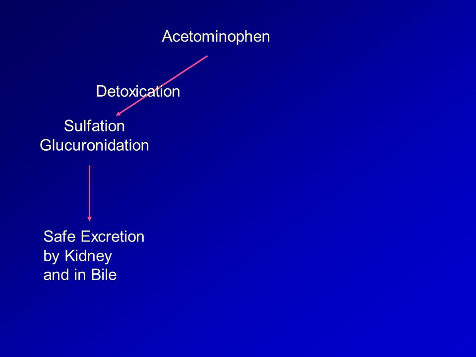 Acetominophen Sulfation Glucuronidation Safe Excretion by Kidney and in Bile Detoxication