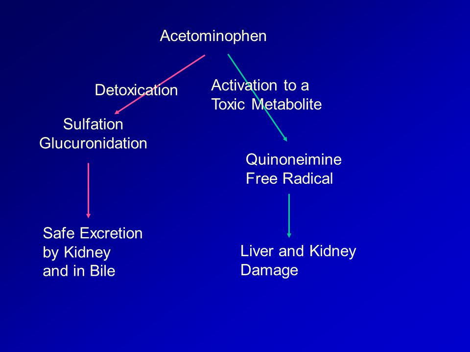 Acetominophen Sulfation Glucuronidation Safe Excretion by Kidney and in Bile Detoxication Quinoneimine Free Radical Liver and Kidney Damage Activation to a Toxic Metabolite