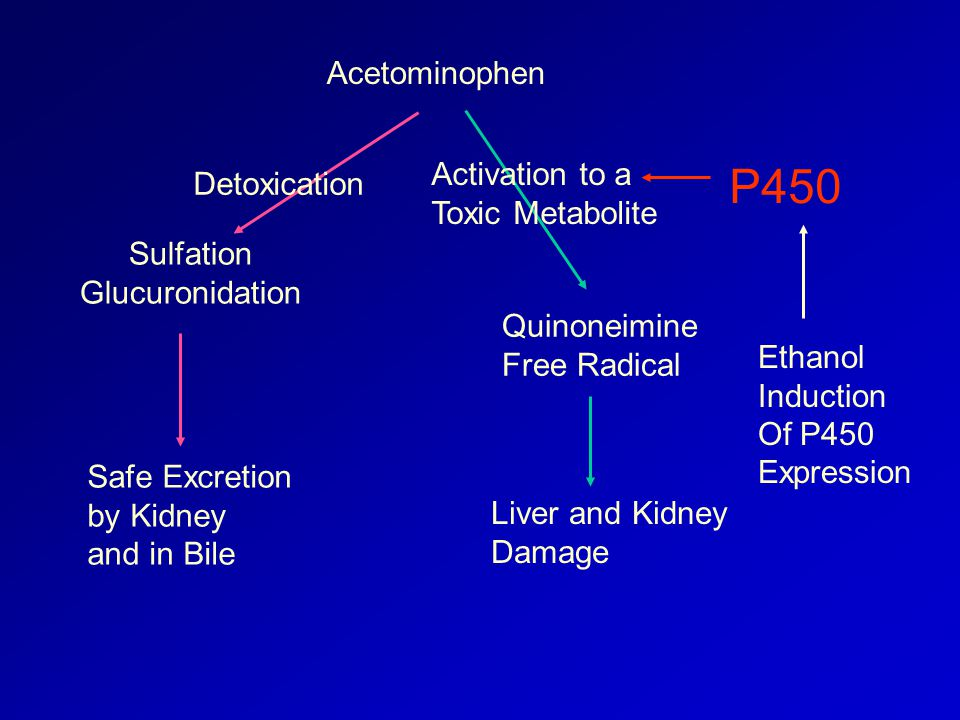 Acetominophen Sulfation Glucuronidation Safe Excretion by Kidney and in Bile Detoxication Quinoneimine Free Radical Liver and Kidney Damage Activation to a Toxic Metabolite P450 Ethanol Induction Of P450 Expression