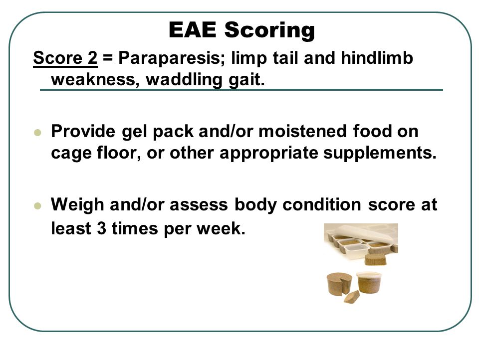 EAE Scoring Score 2 = Paraparesis; limp tail and hindlimb weakness, waddling gait.