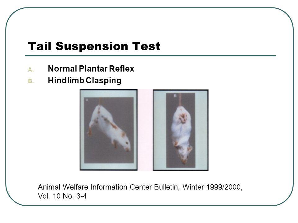 Tail Suspension Test A. Normal Plantar Reflex B.