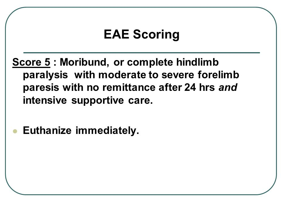 EAE Scoring Score 5 : Moribund, or complete hindlimb paralysis with moderate to severe forelimb paresis with no remittance after 24 hrs and intensive supportive care.