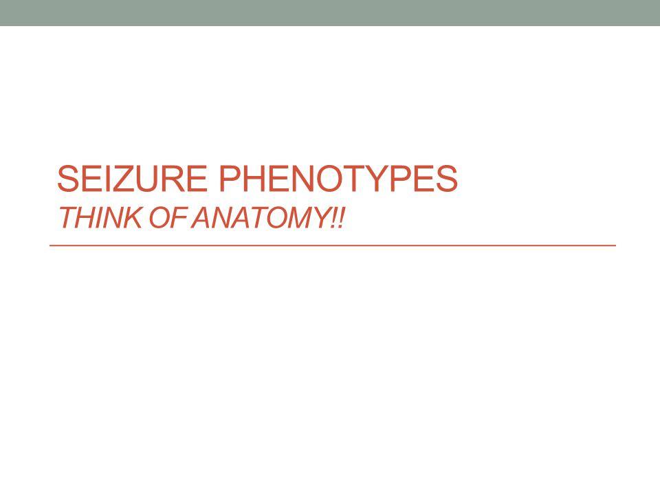 SEIZURE PHENOTYPES THINK OF ANATOMY!!