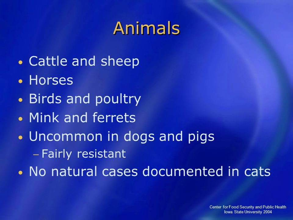 Center for Food Security and Public Health Iowa State University 2004 Animals Cattle and sheep Horses Birds and poultry Mink and ferrets Uncommon in d