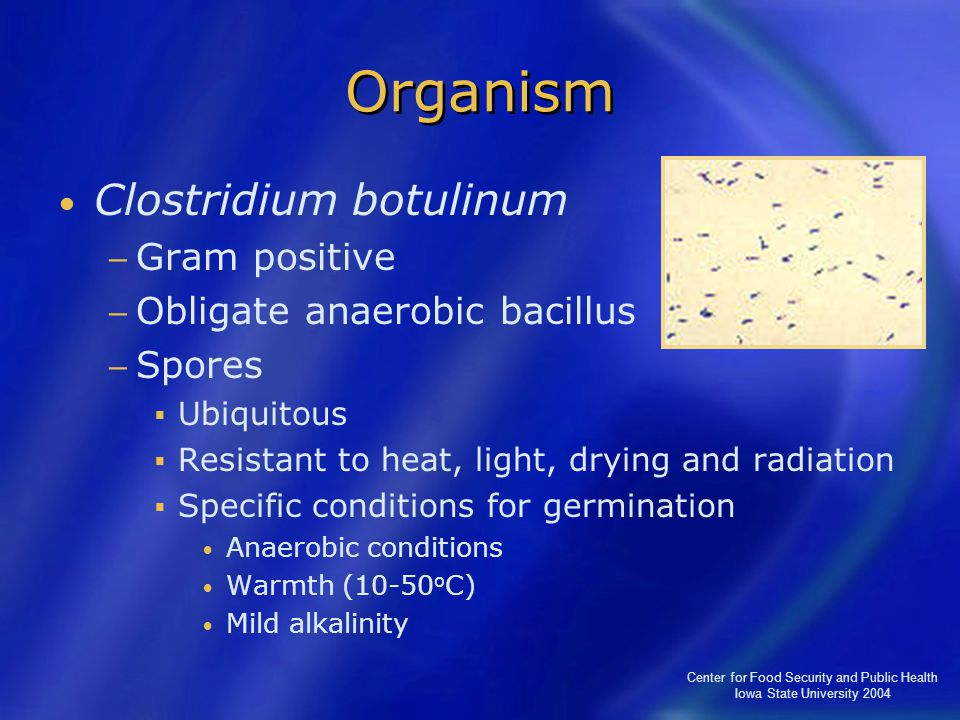 Center for Food Security and Public Health Iowa State University 2004 Organism Clostridium botulinum − Gram positive − Obligate anaerobic bacillus − S