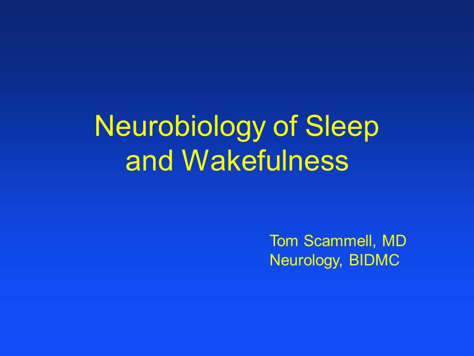 Neurobiology of Sleep and Wakefulness Tom Scammell, MD Neurology, BIDMC