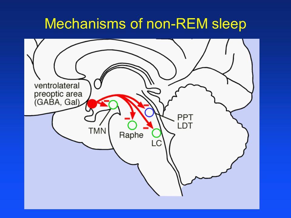 Mechanisms of non-REM sleep