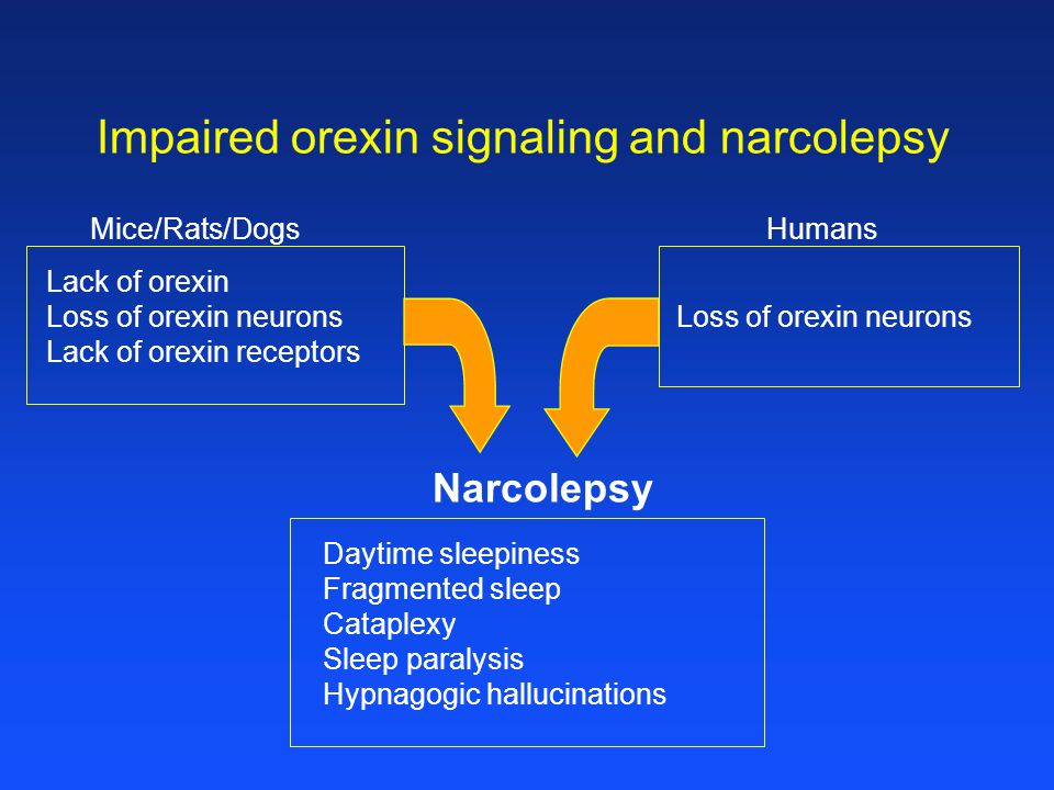 Impaired orexin signaling and narcolepsy Daytime sleepiness Fragmented sleep Cataplexy Sleep paralysis Hypnagogic hallucinations Loss of orexin neurons HumansMice/Rats/Dogs Lack of orexin Loss of orexin neurons Lack of orexin receptors Narcolepsy