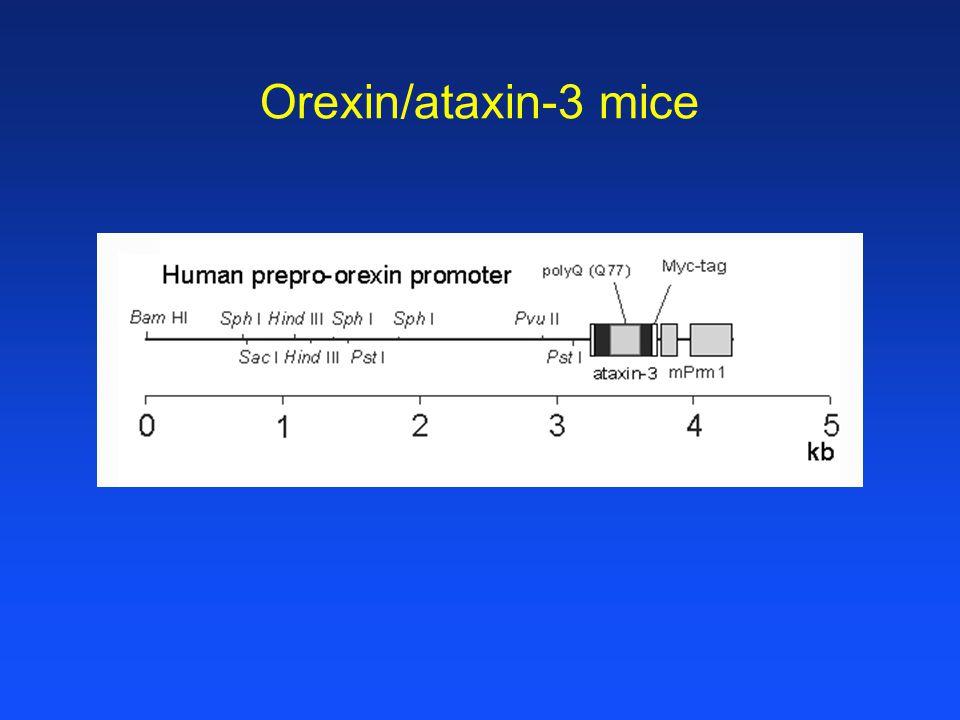 Orexin/ataxin-3 mice