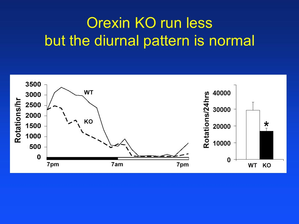Orexin KO run less but the diurnal pattern is normal