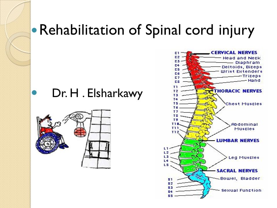 Rehabilitation of Spinal cord injury Dr. H. Elsharkawy
